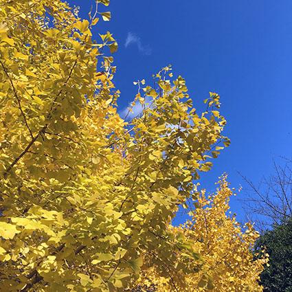 綺麗な黄色と青